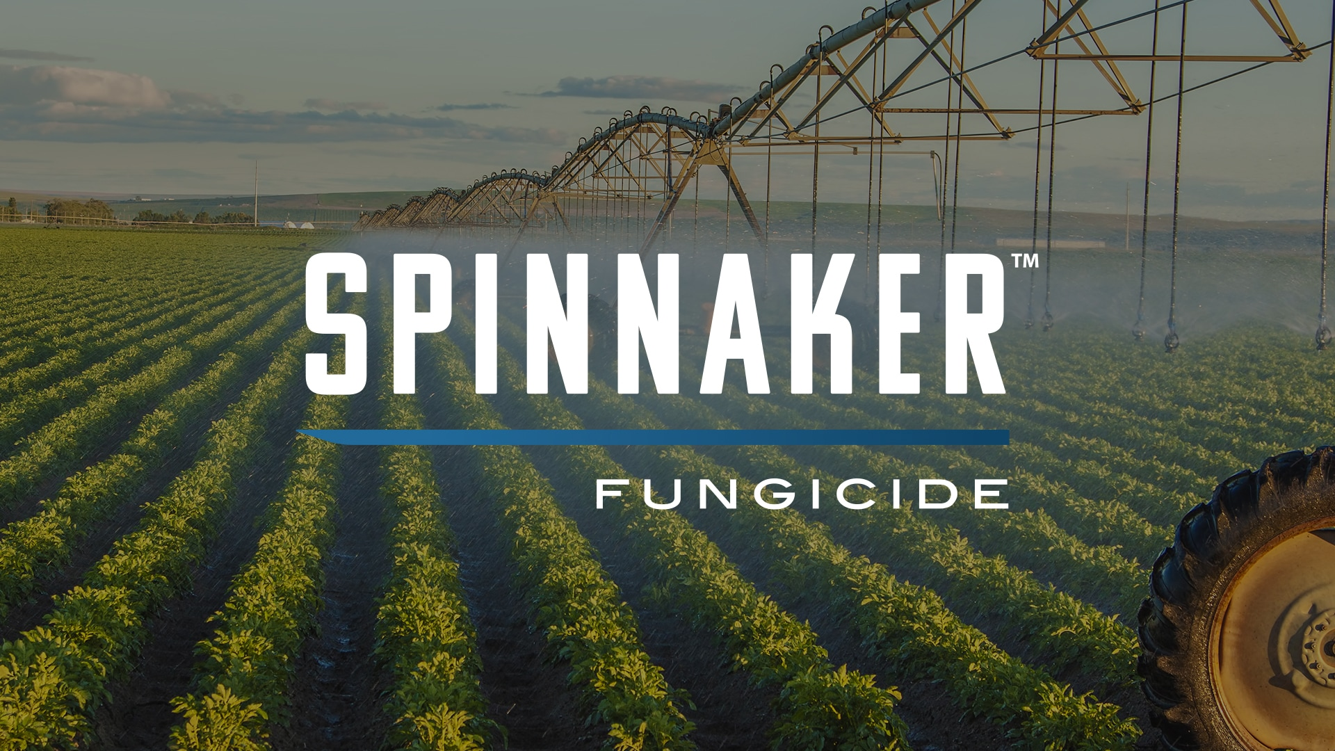 Spinnaker Featured Image